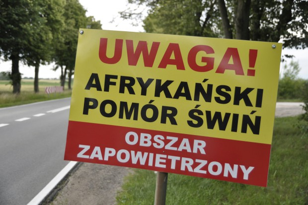 Sto drugie ognisko ASF u trzody chlewnej w Polsce