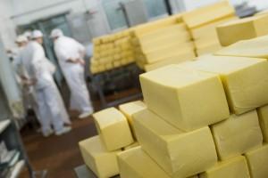 Jak bezpiecznie produkować ser i inne produkty mleczne w przetwórstwie farmerskim?