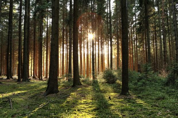 Walka ze zmianami klimatu wymaga zdrowych i produktywnych lasów