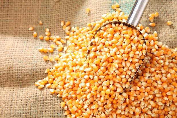 UE: Redukcja ceł importowych na kukurydzę, sorgo i ryż