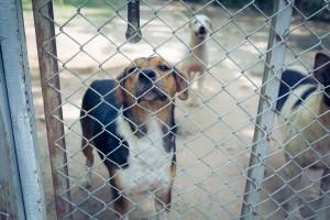 Eksperci: Liczba bezdomnych zwierząt w Polsce rośnie