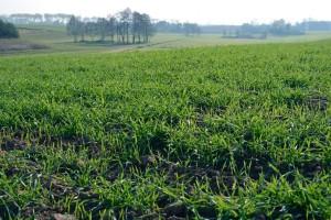 Nieznacznie wzrosła liczba producentów ekologicznych