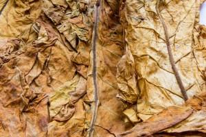 Komisja Finansów za zmianami wymierzonymi w szarą strefę w obrocie tytoniem