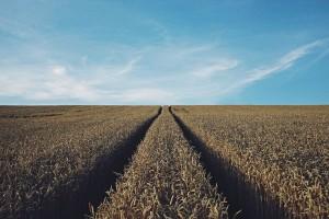 Będzie abolicja dla bezumownych użytkowników ziemi?