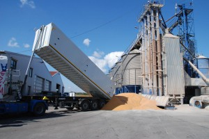 Suszenie ziarna  kukurydzy – ile zapłacimy za usługę w tym roku?
