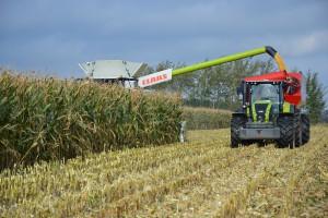 Oficjalny rekord zbioru kukurydzy na ziarno