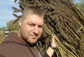 Pierwsze konopne żniwa u Lechów. Jak plantator poradził sobie ze zbiorem ponad 4-metrowych roślin?