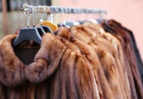 Min. rolnictwa: W 2016 wartość eksportu futer z Polski wyniosła 1,5 mld zł