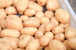 Rosja: Wzrósł import ziemniaków