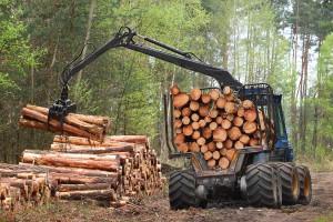 Tomaszewski: Myślimy o tym, by wycofać harvestery z Puszczy Białowieskiej
