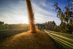 Rosji brakuje infrastruktury do eksportu zbóż