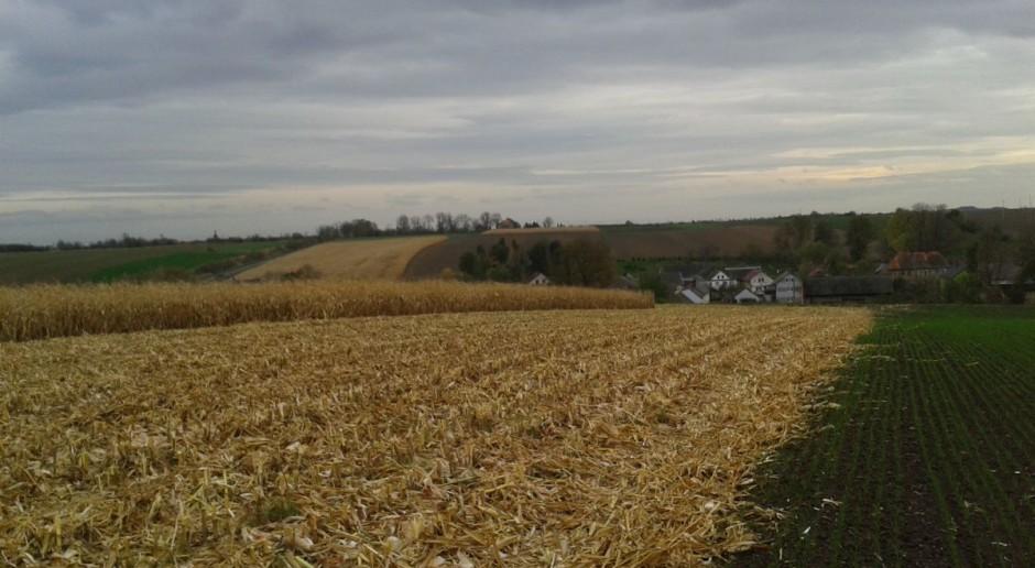 Opolszczyzna i Płaskowyż Głubczycki to jeden z najważniejszych terenów rolniczych w naszym kraju. Na zdjęciu pagórki równiny lessowej poprzecinane urodzajnymi polami.