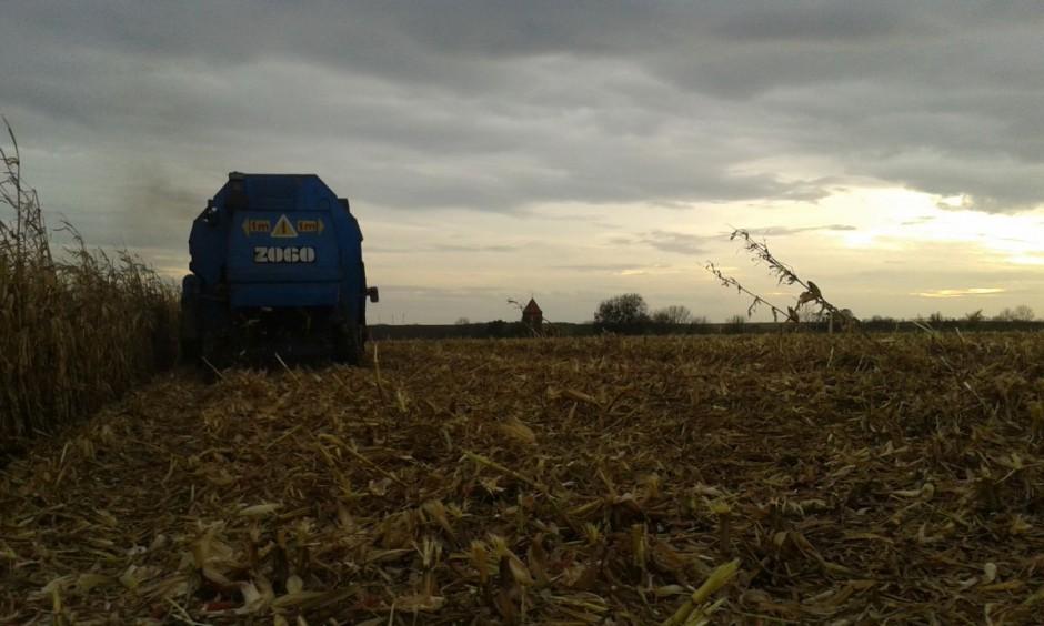 Zbiory w gospodarstwie wystartowały 18 października. Można śmiało powiedzieć, że gospodarstwo od wielu lat specjalizuje się w uprawie tej rośliny. Nestor rodziny był jednym z pionierów w uprawie kukurydzy na tym terenie. Synowie przejęli pałeczkę.
