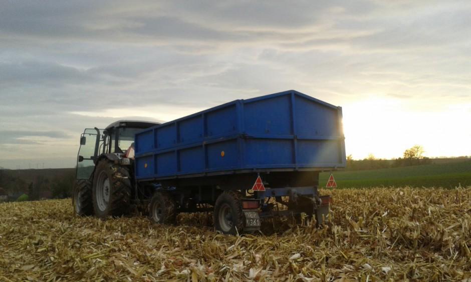 Średni plon na zebranym areale wyniósł 13 ton mokrej kukurydzy z hektara…