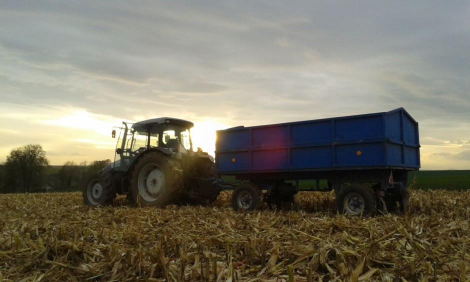 … a średnia wilgotność 27% – 28%. Część zebranej kukurydzy sprzedawana była w tym roku jako mokra, część suszona w gospodarstwie we własnej suszarni.