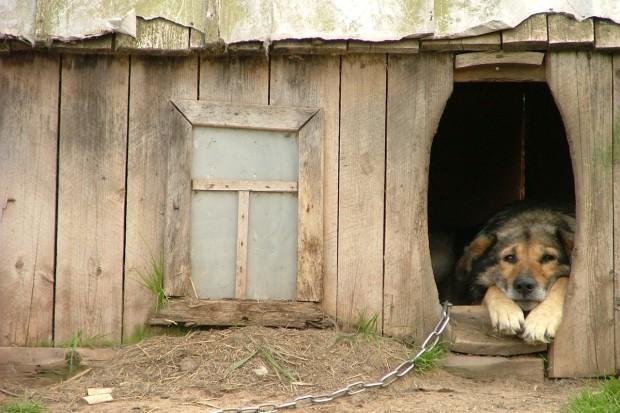TOZ: Obecnie brakuje możliwości kontroli warunków życia zwierząt