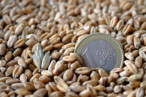 Mocny spadek ceny pszenicy na CBOT