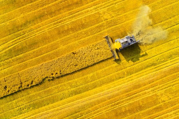 Tylko rzepak i kukurydza podrożały – podsumowanie miesięczne