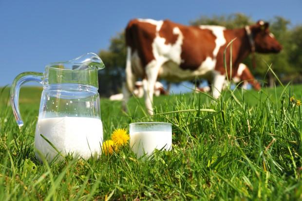 Wyniki kontroli użytkowości mlecznej w Niemczech