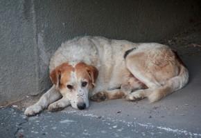 Nowa ustawa precyzuje, co to maltretowanie zwierząt - to ważne