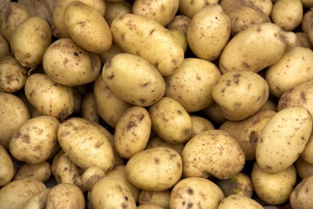 Wysoka produkcja ziemniaka jadalnego – niższa cena