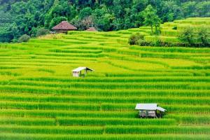 Nieco większe zbiory roślin uprawnych w Chinach