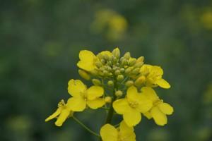 Biopaliwa z surowców rolnych – co dalej?