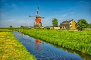 Holenderscy rolnicy z rekordowym dochodem