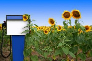 Niemcy: Wzrósł eksport biodiesla