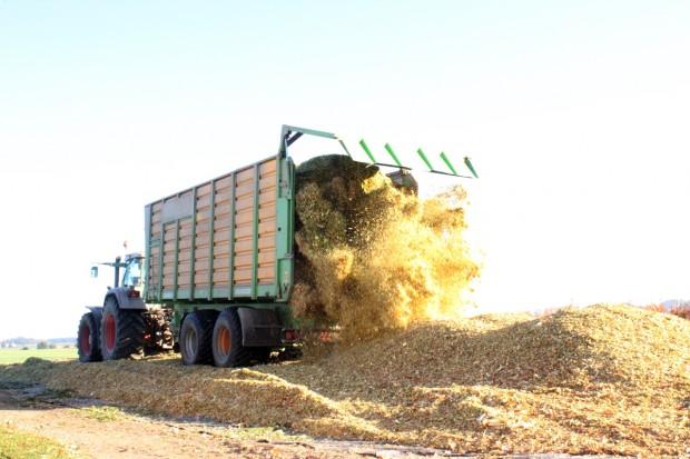 Najbardziej plenne odmiany kukurydzy kiszonkowej