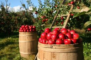 """KE: """"Perspektywy unijnego rolnictwa 2017-2030 – rynek wina, oliwek, owoców i warzyw"""""""