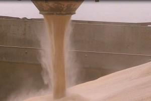 Ukraina wyeksportowała ponad 21 mln ton zbóż