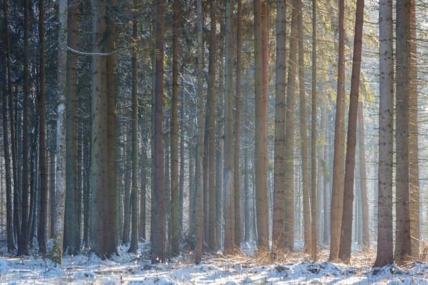 Dokonania Ministerstwa Środowiska pod rządami Jana Szyszki