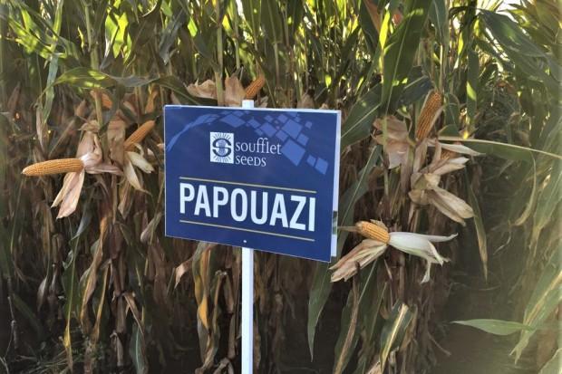 SOUFFLET AGRO POLSKA wprowadza na polski rynek własną markę nasion SOUFFLET SEEDS