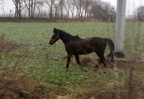 Droga dla konia, mandat dla właściciela