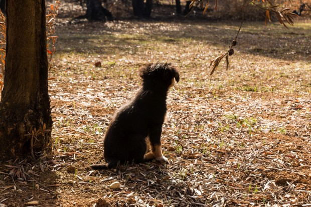 Portugalia: Surowsze kary nie ograniczyły przemocy wobec zwierząt