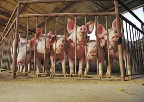 Dla wzmocnienia bioasekuracji w gospodarstwie