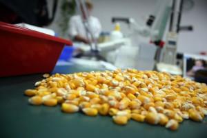 W Środzie Śląskiej o kukurydzy, soi i nie tylko