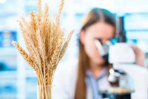 Sejm znowelizował ustawę o GMO