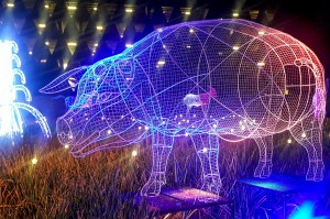 Sztuczna inteligencja pomoże hodowcom świń