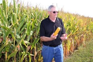 Prawie 29 proc. mniej mykotoksyn z ziarna kukurydzy GMO