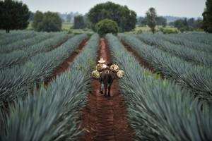 UE porozumiała się z Meksykiem ws. umowy o wolnym handlu