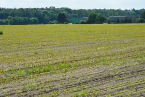 IUNG: Mimo niedoborów wody, na razie nie ma zagrożenia suszą rolniczą