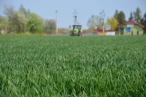 Nowy trójskładnikowy fungicyd na rynku