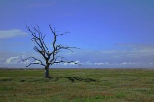 Czy potrzebny jest stan klęski żywiołowej w związku z suszą?