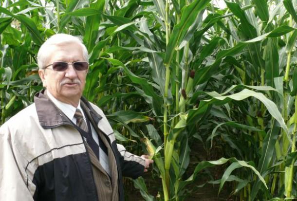 Stabilna kukurydza