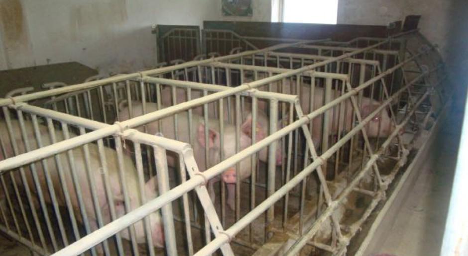 8,5 tys. ton wieprzowiny do przechowania