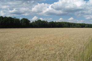 Rośnie ilość ubezpieczeń suszowych
