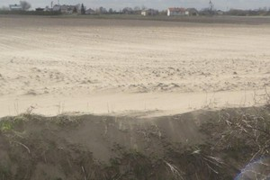 Burze piaskowe przykryły oziminy
