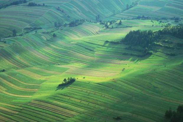 Sporne nasiennictwo przez GMO